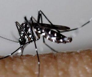 Moustique tigre: 17 signalements de Zika et de Dengue dans les Pyrénées Orientales